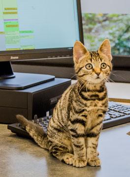 Register with us kitten