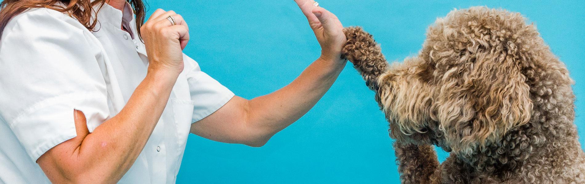 Ook in Corona-tijd de beste zorg voor uw dier