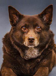 Seniorenhond dierenarts Hengelo