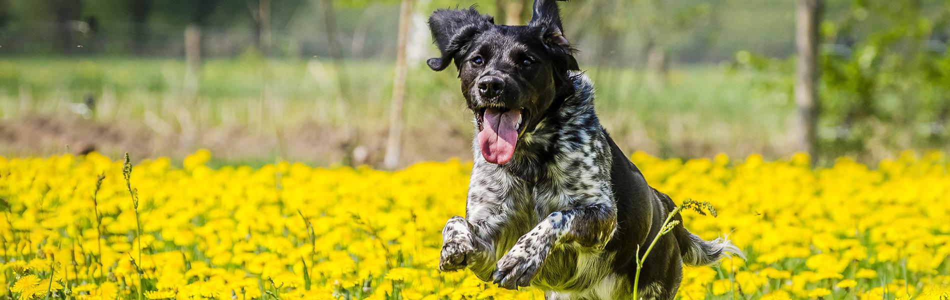 Sterilisatie & castratie hond